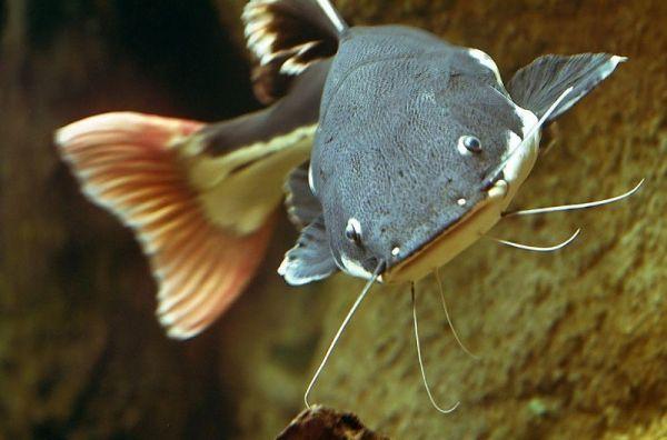 Ngủ mơ thấy cá trê báo hiệu điềm lành hay dữ?