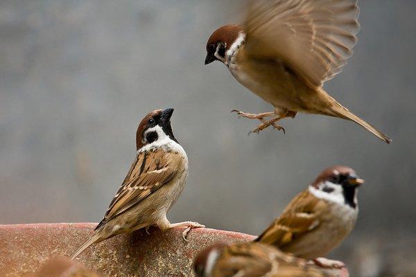 Mơ thấy các loại chim khác nhau
