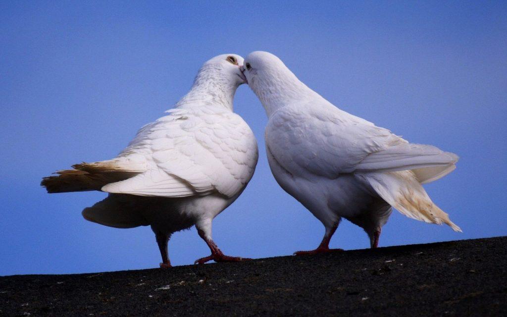 Mơ thấy chim trong những trường hợp cụ thể
